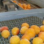 Food Industry